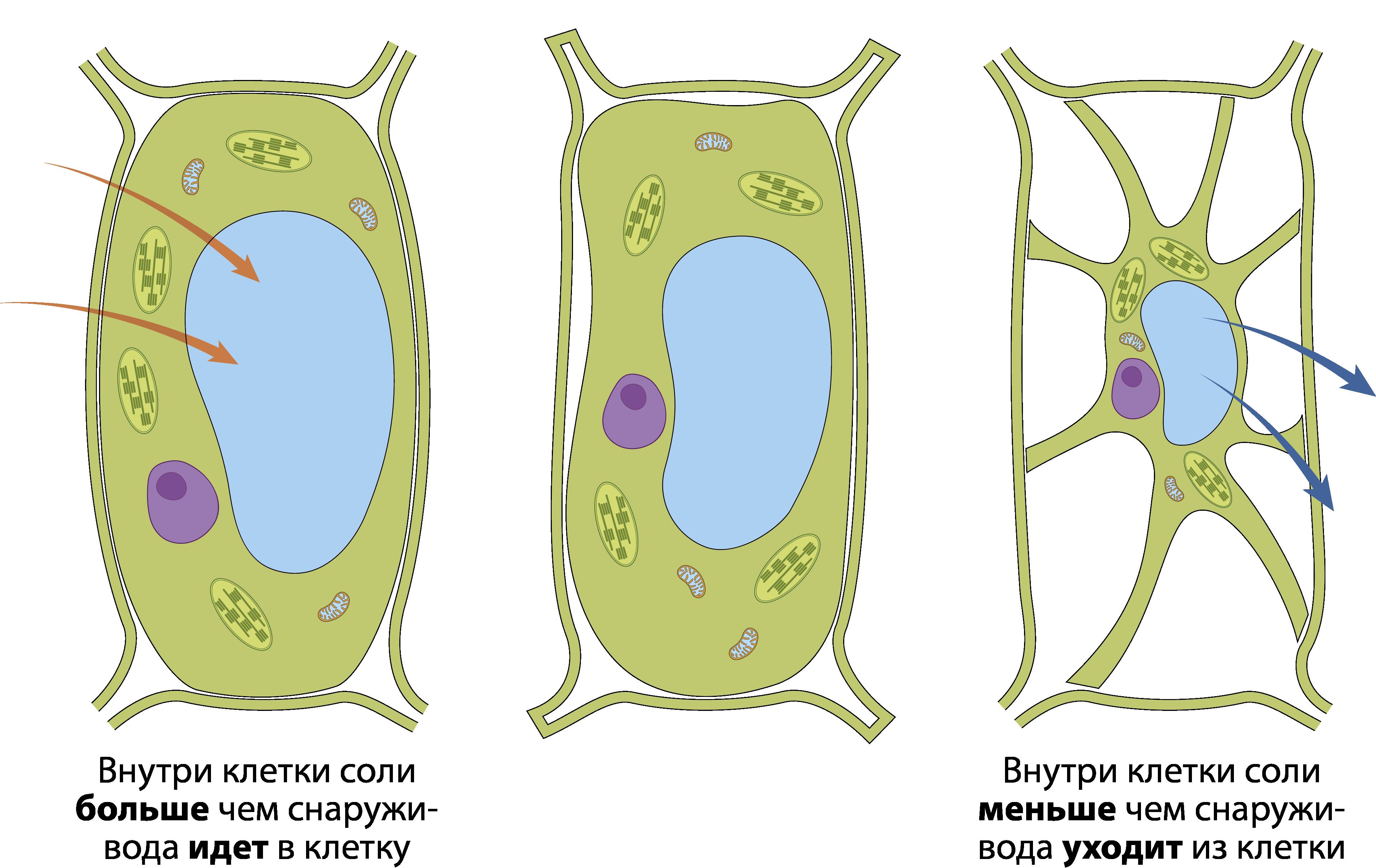 Соль в клетке