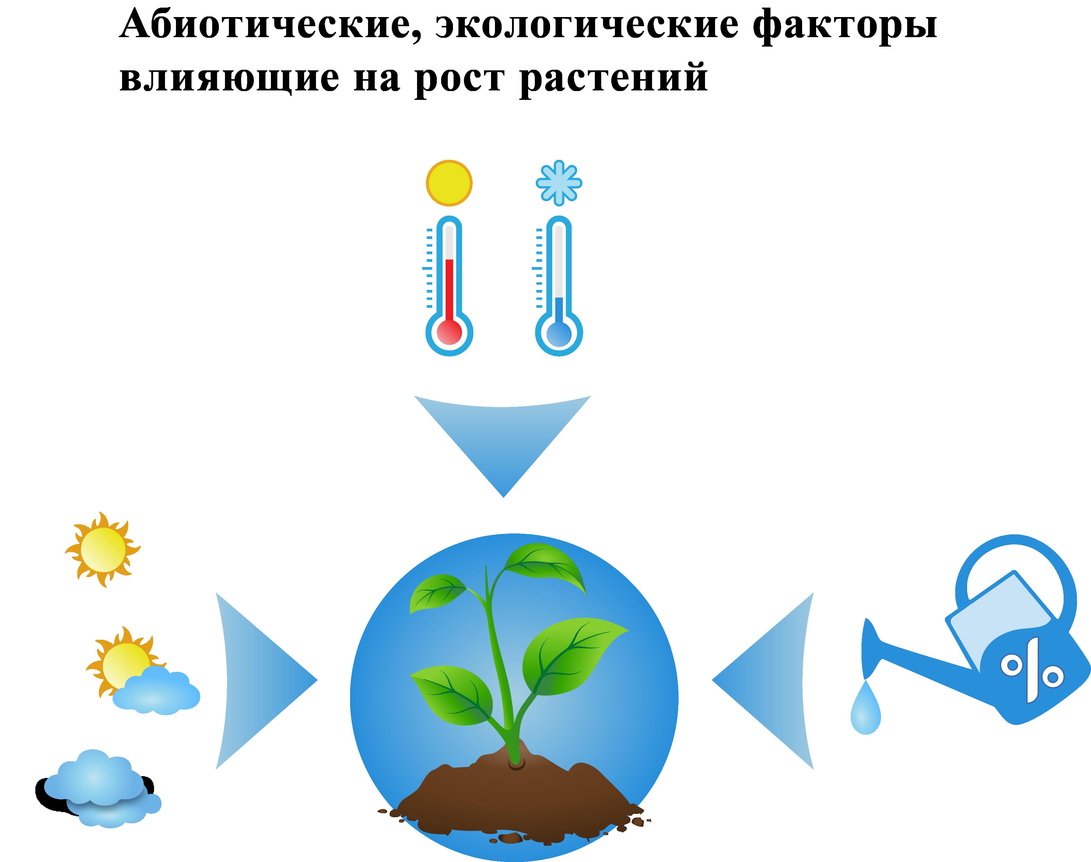 Абиотические и экологические факторы влияющие на рост растений