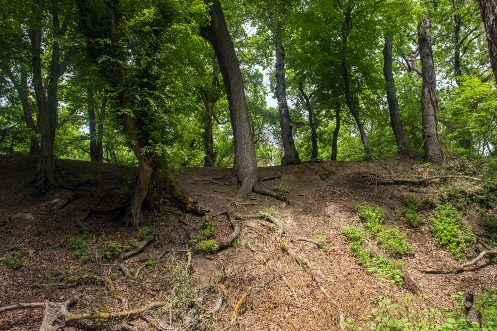 растения способны корнями укреплять слабые грунты