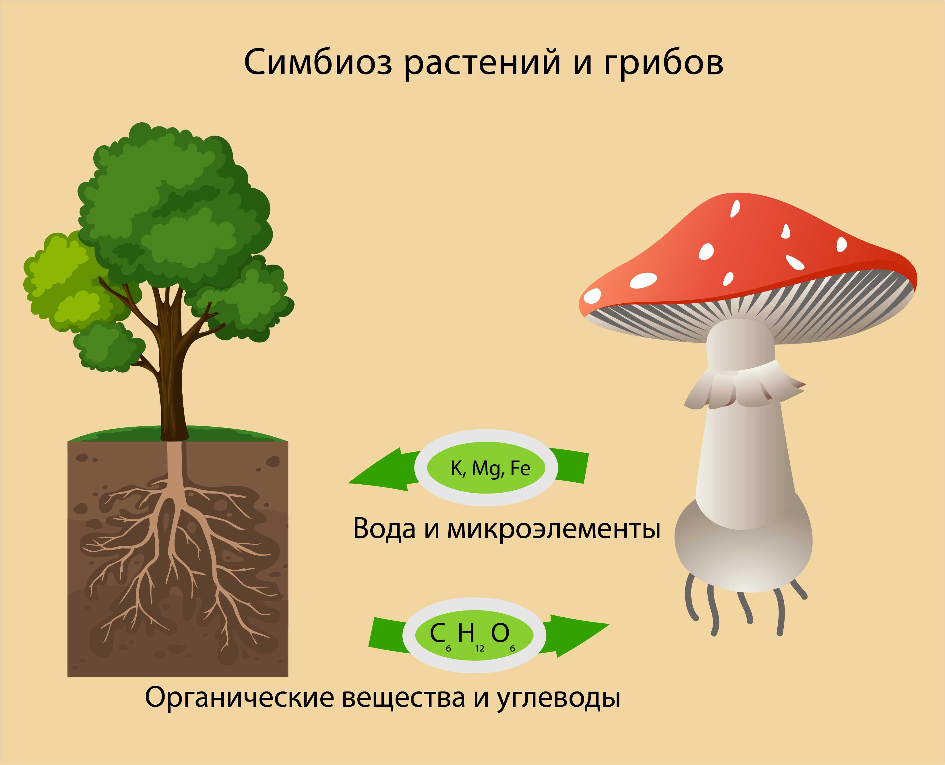 Симбиоз растений и гриба