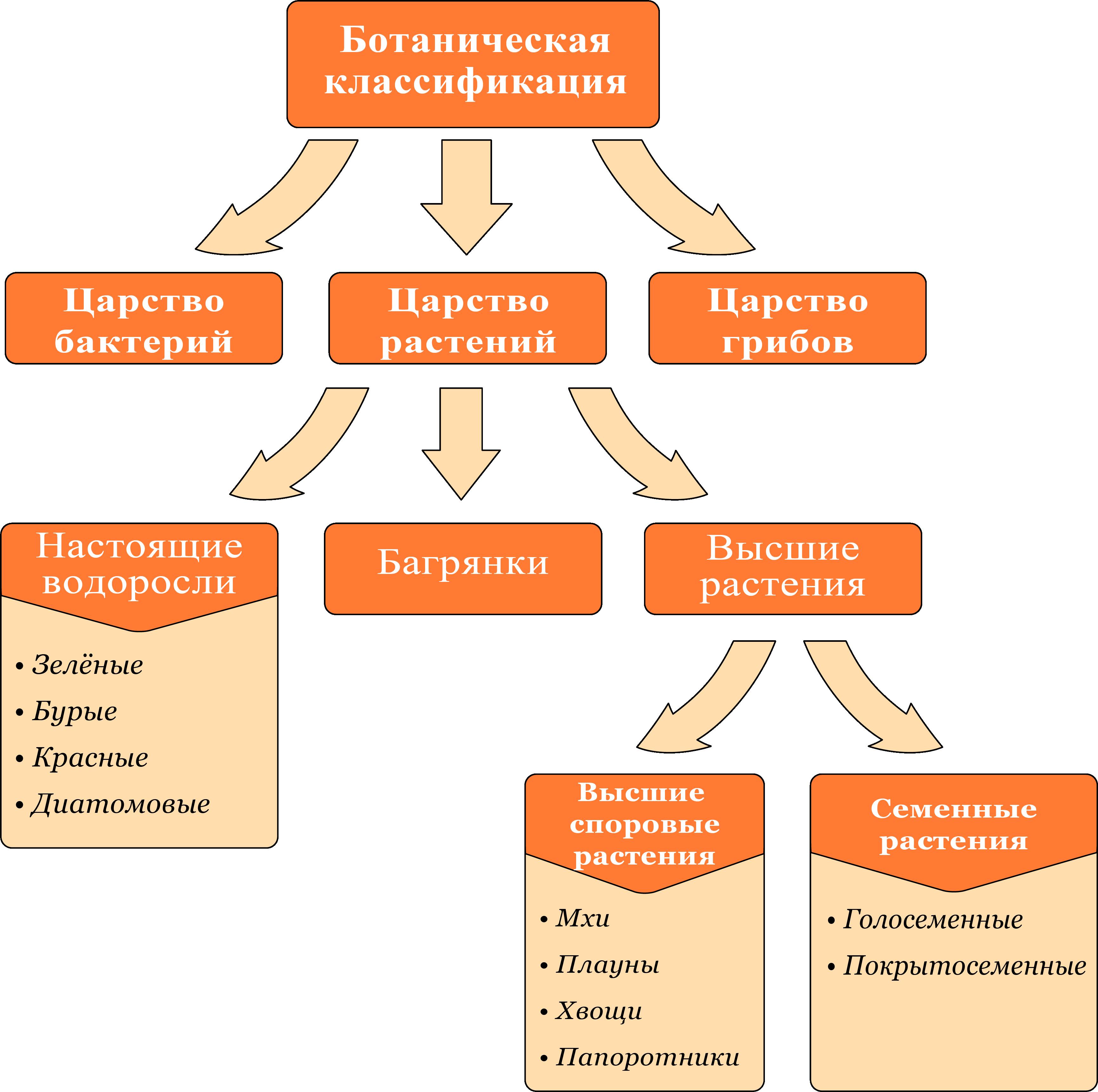 ботаническая классификация