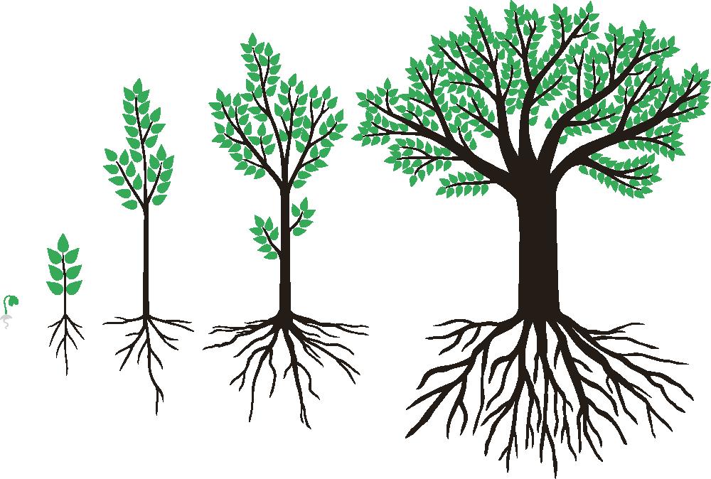 Корни растений разных ярусов