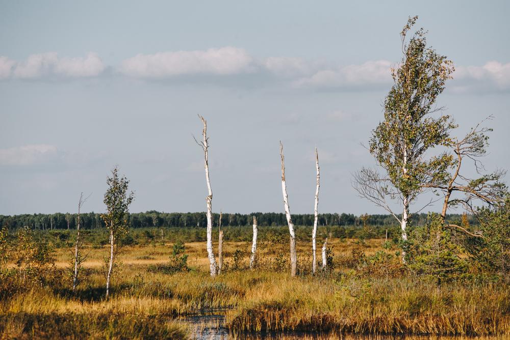 лес сменяется фитоценозом болота