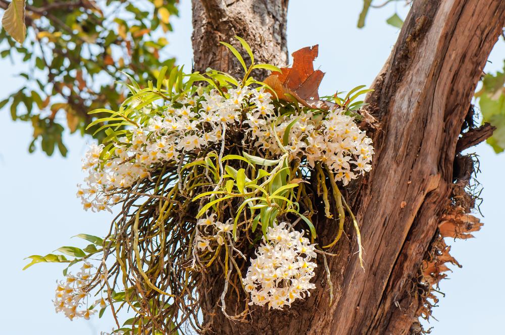 Дикая орхидея на дереве