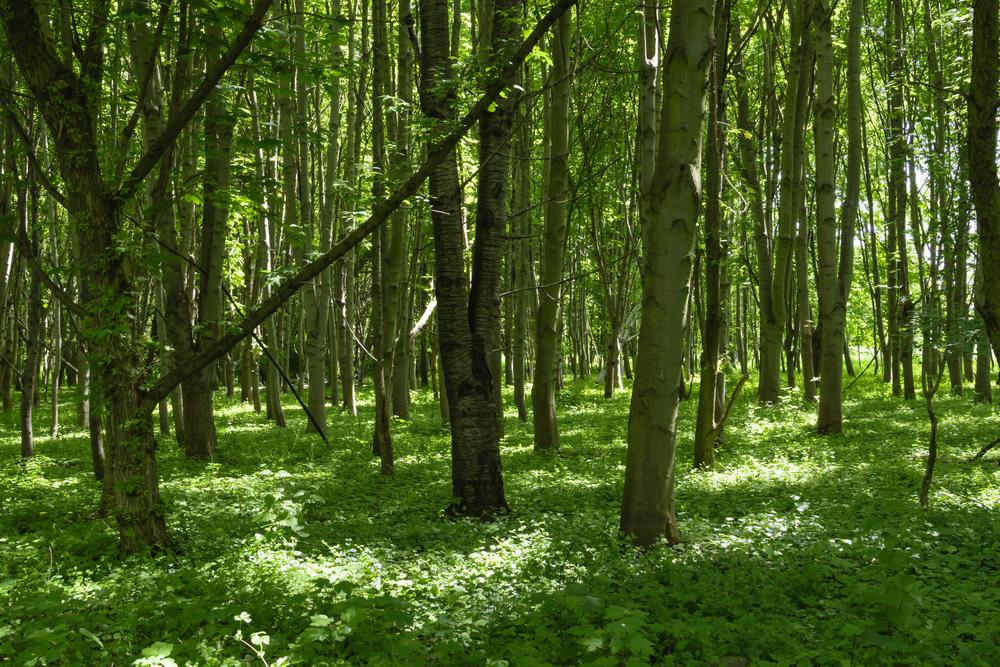 Сообщество широколиственного леса