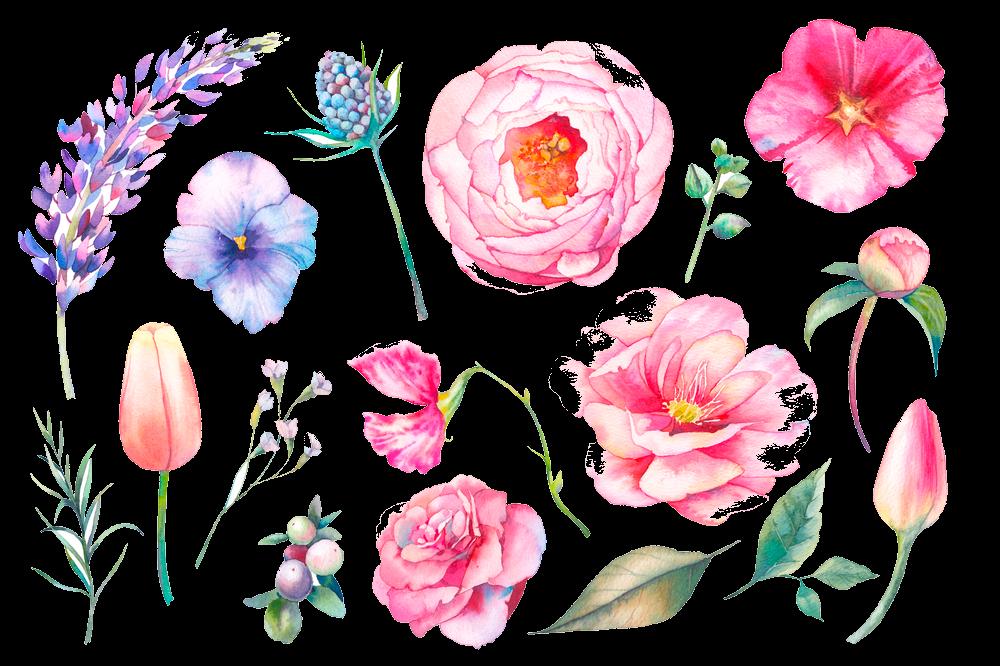 Внешне цветки очень разнообразны