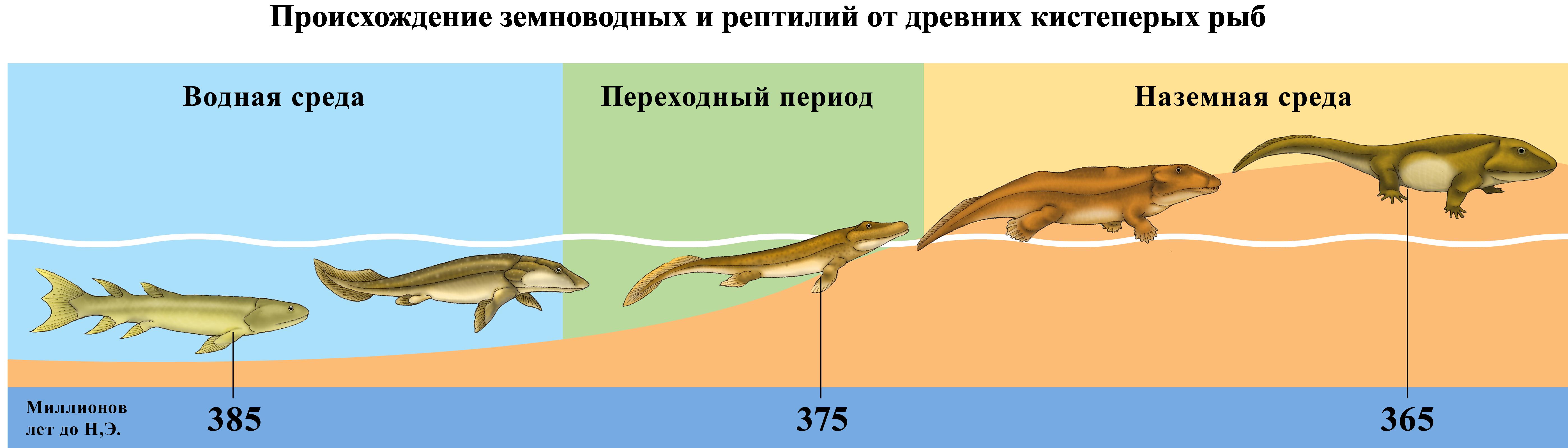 Происхождение земноводных и рептилий