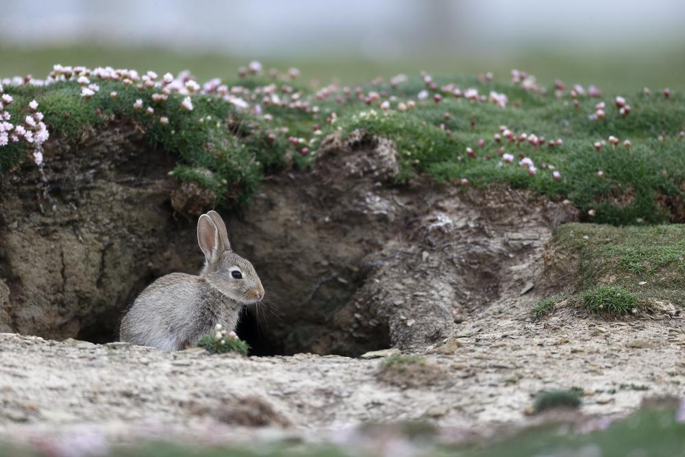 Кролики чаще роют норы.