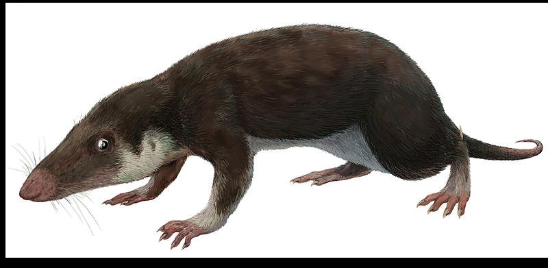 первое млекопитающее