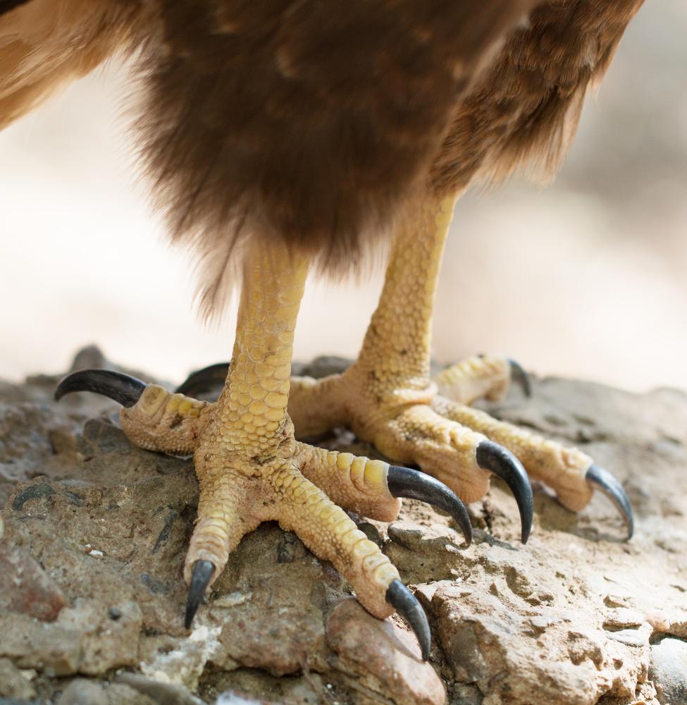 Лапы птиц