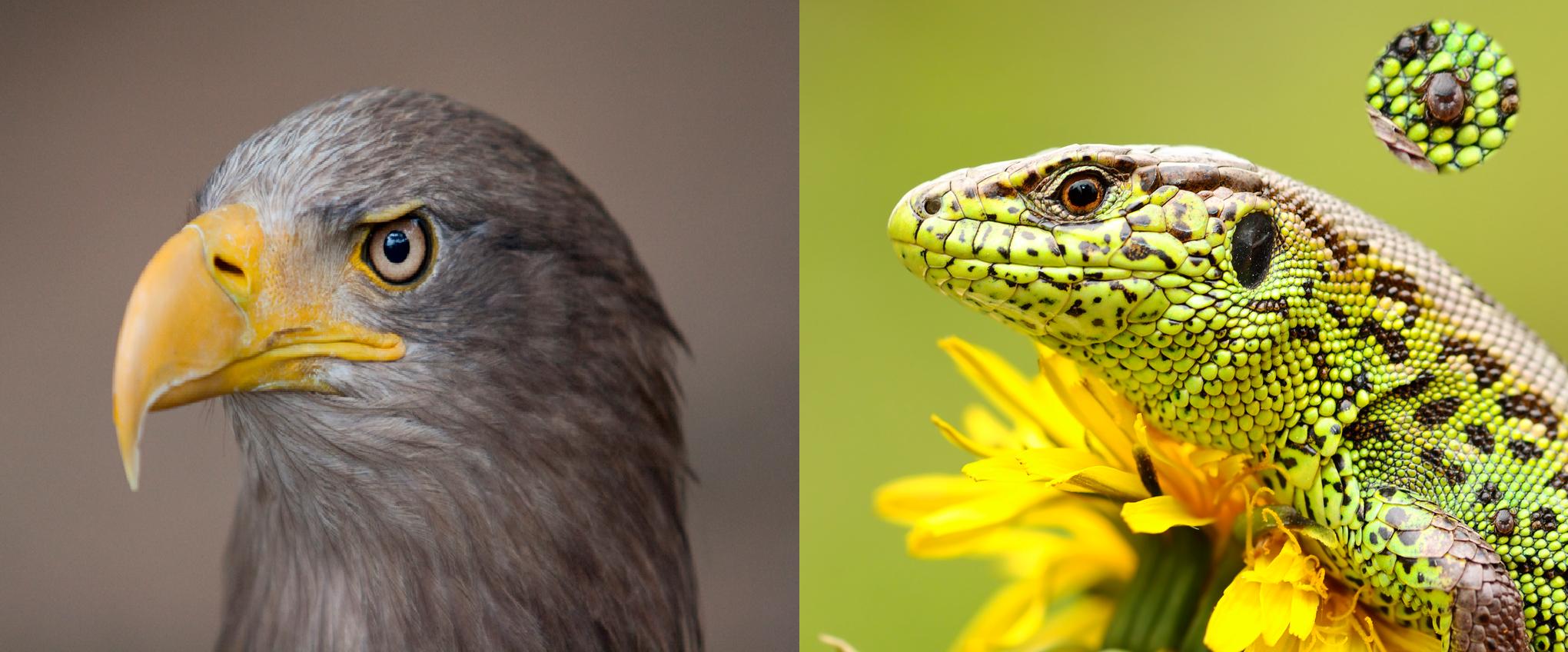 Основные отличия птиц от рептилий