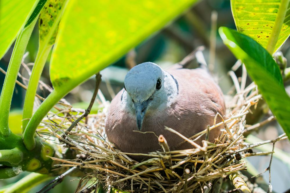 Птицы обычно насиживают яйца в гнезде.