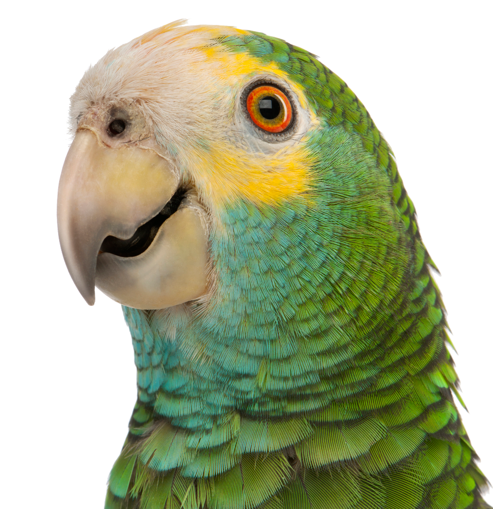 Голова птиц