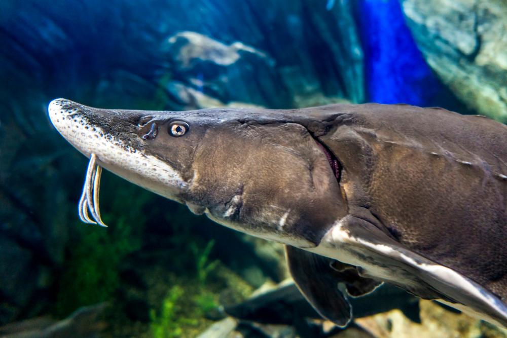 Усы у рыбы