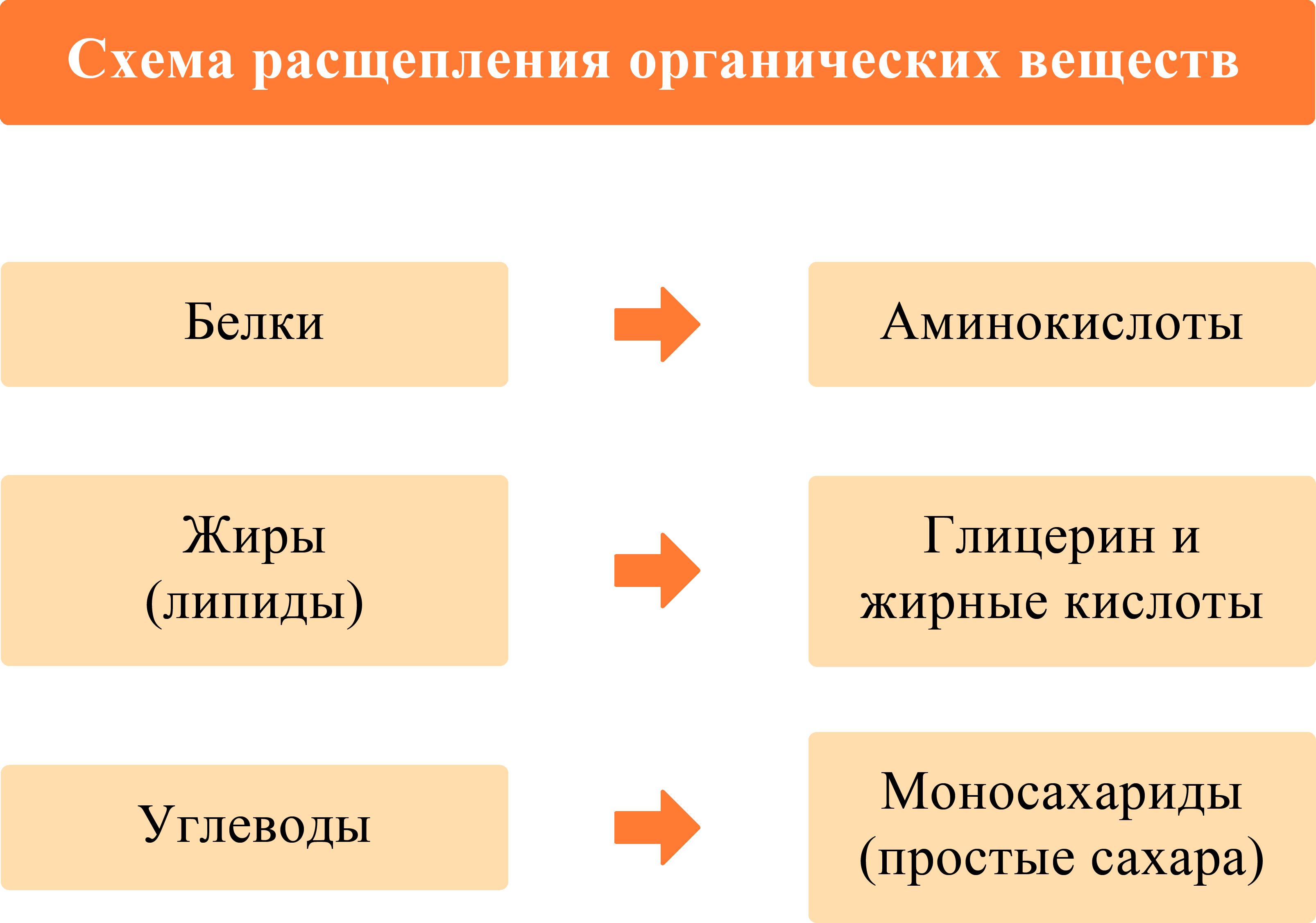 Схема расщепления органических веществ