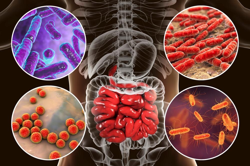 Бактерии кишечника
