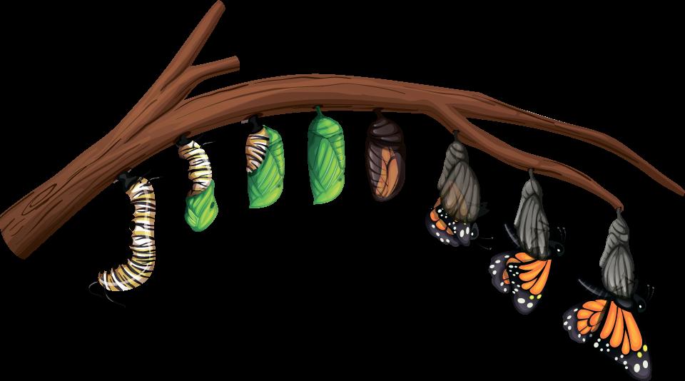 Бабочка откладывает яйца