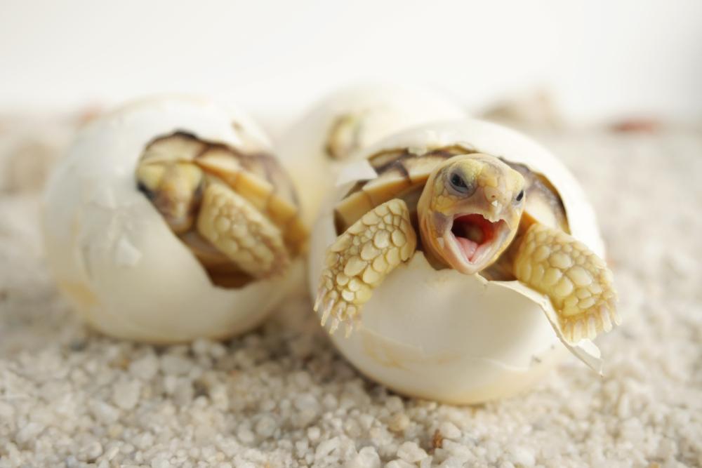 Прямой яйцекладный тип развития