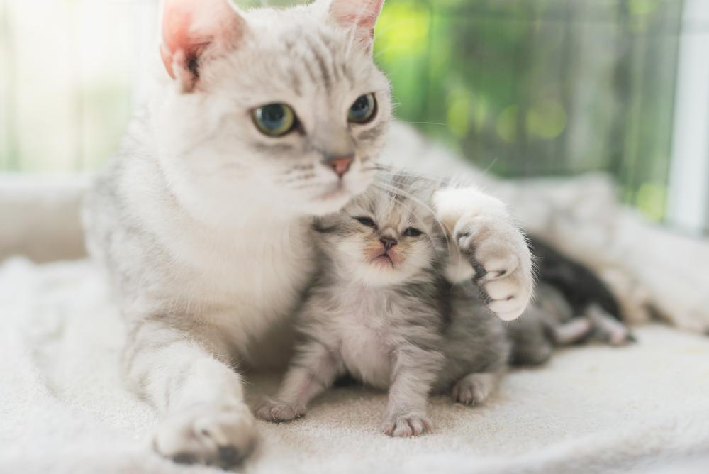 котята похожи на взрослую кошку