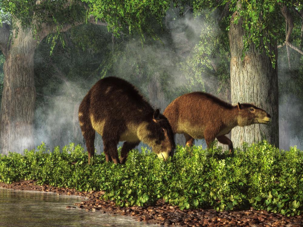 Посмотри на предков современных лошадей