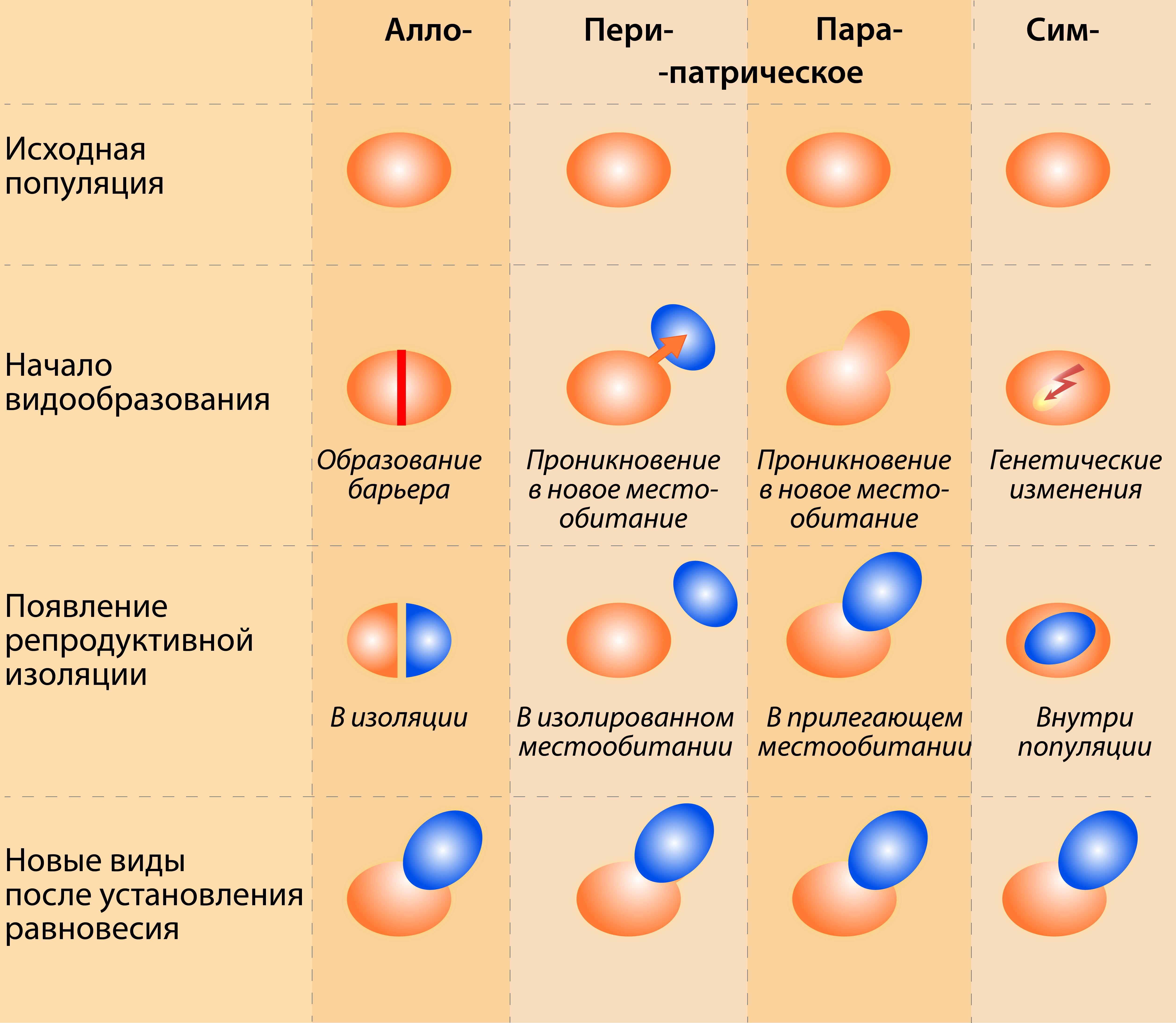 Существует четыре способа видообразования