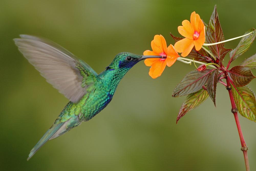 опыление птицами