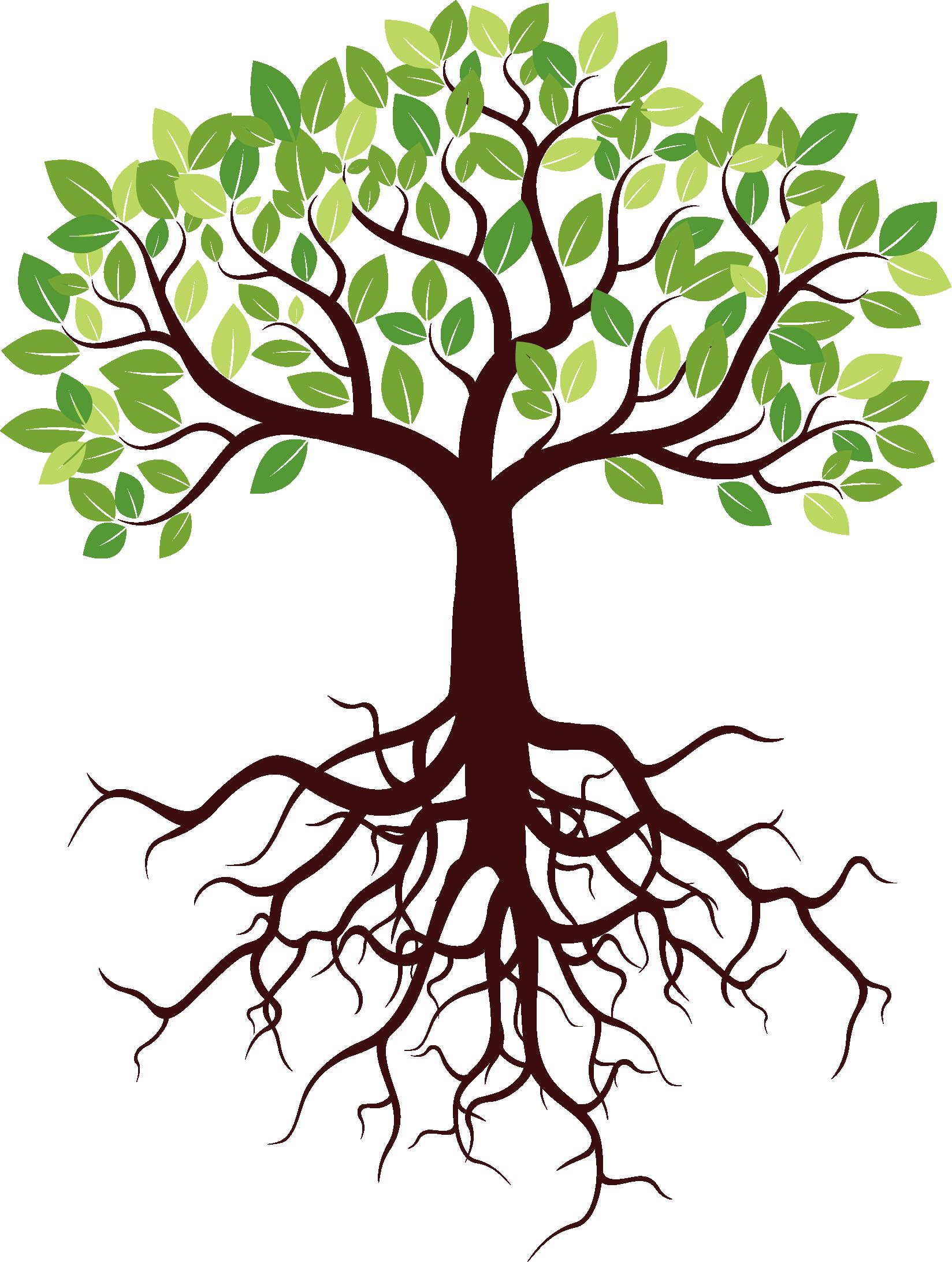 Корень - орган растения