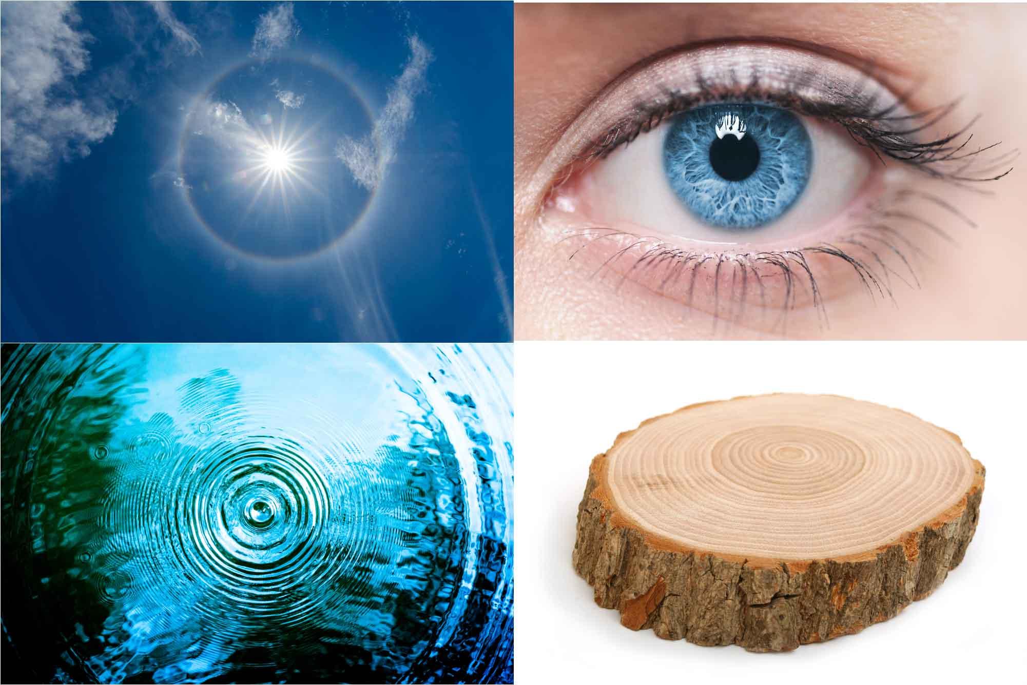 В живой и неживой природе круги и окружности