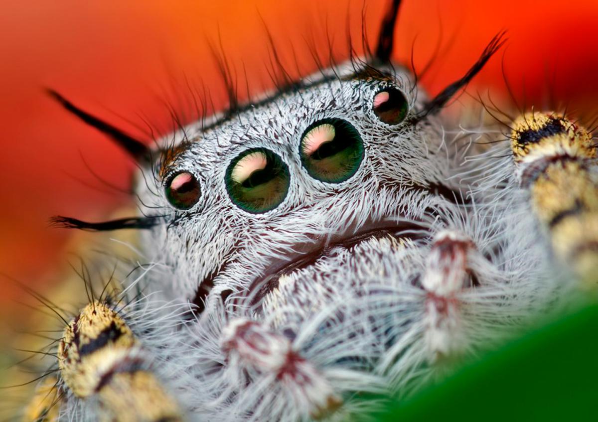органы осязания у паукообразных