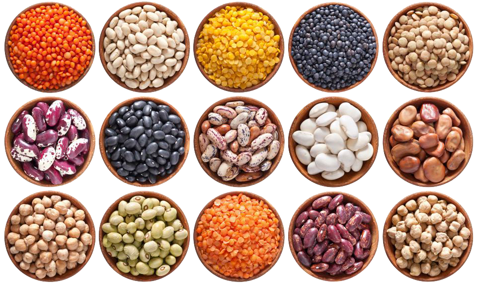 пищевые бобовые растения
