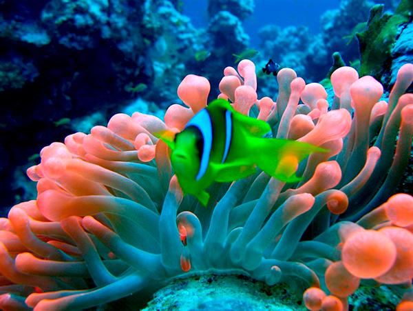 колония губок на коралловом рифе