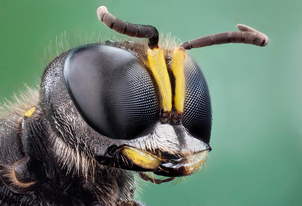 фасеточный глаз насекомого