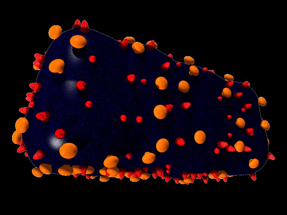 кубовидные (вирус оспы)