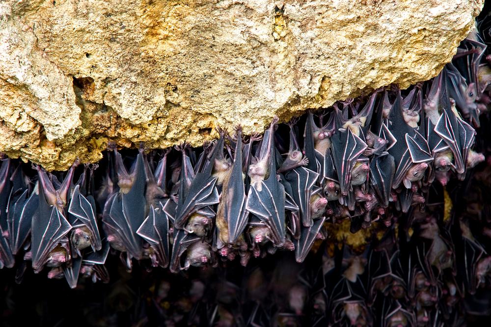 Очень много селитры скапливается в пещерах